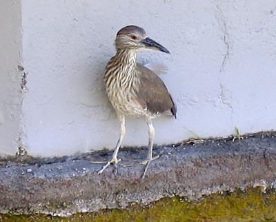 20060501_bird.jpg