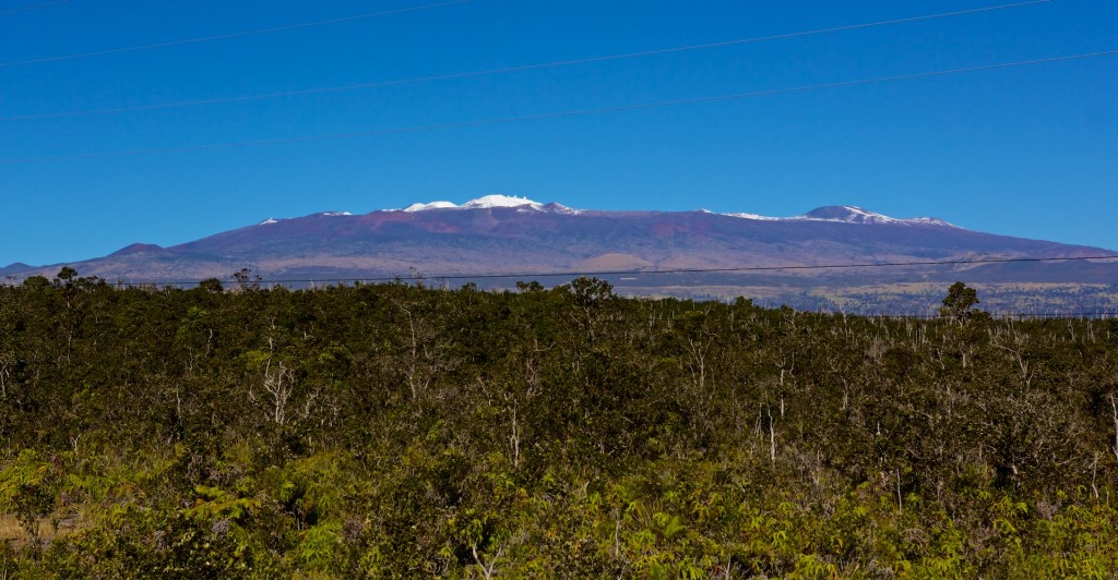 The Ohia forest next to the Daniel K. Inouye Highway (aka Saddle Road) with the snow-capped Mauna Kea in the background on Sunday, January 4, 2015.